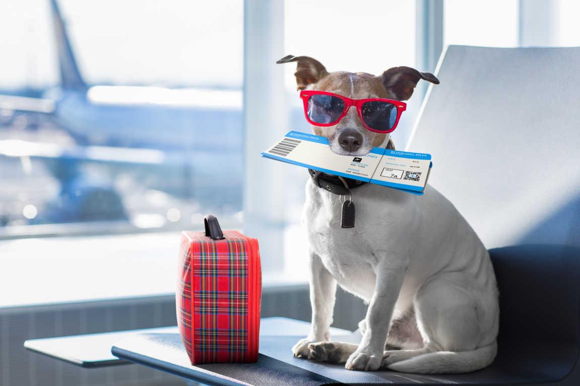 Llevarnos a nuestras mascotas de viaje es cada día más habitual